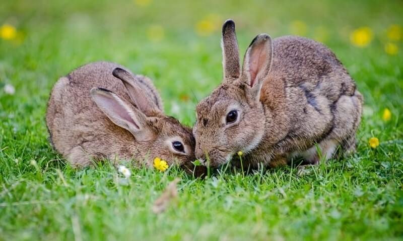 Как избавиться от кроликов и держать их подальше от своего сада