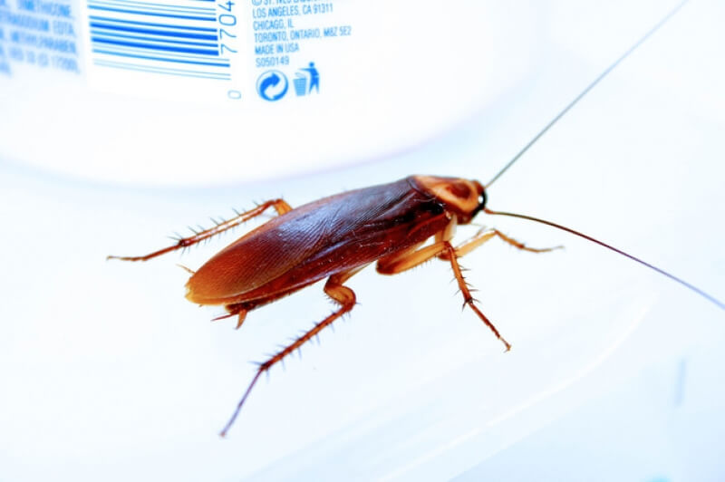 «Пальмовые жуки»: как избавиться от этих тварей навсегда?