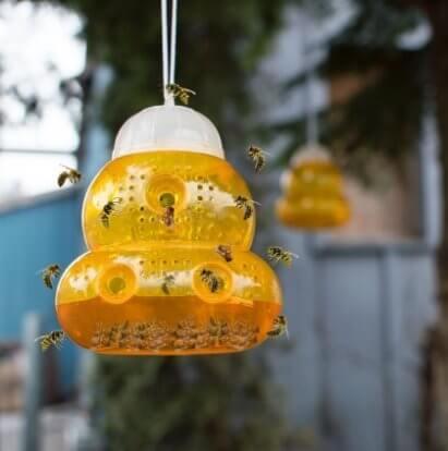 Как избавиться от пчел-галикт (потовых пчел)?