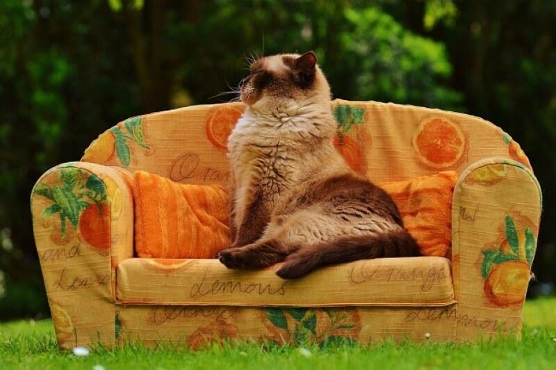 Как избавиться от блох у кота или котенка: лучшие средства