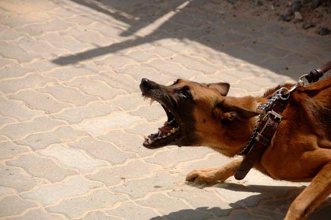 Какой отпугиватель собак выбрать? Обзор отпугивателя с датчиком движения