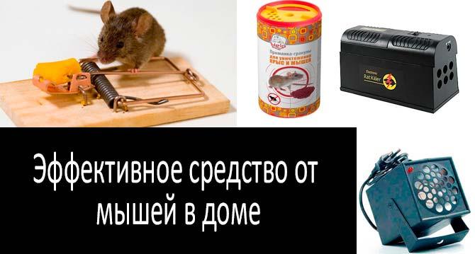 Эффективное средство от мышей в доме: фото
