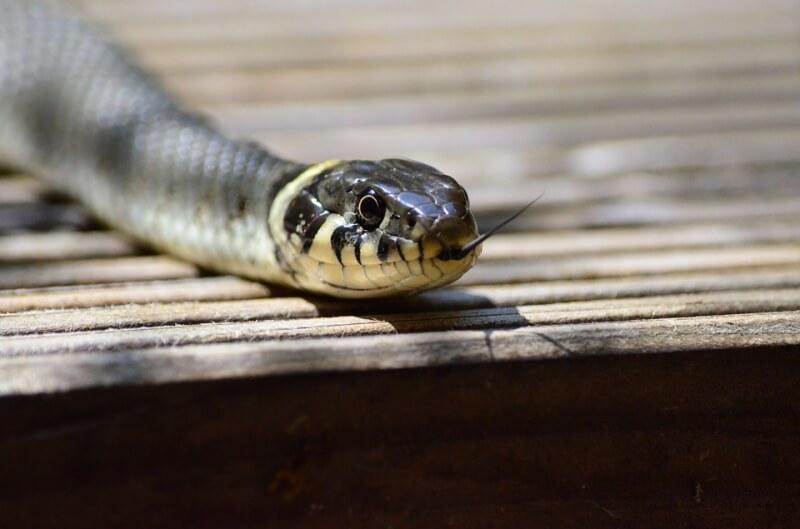 Как отпугнуть змей - лучшие отпугиватели