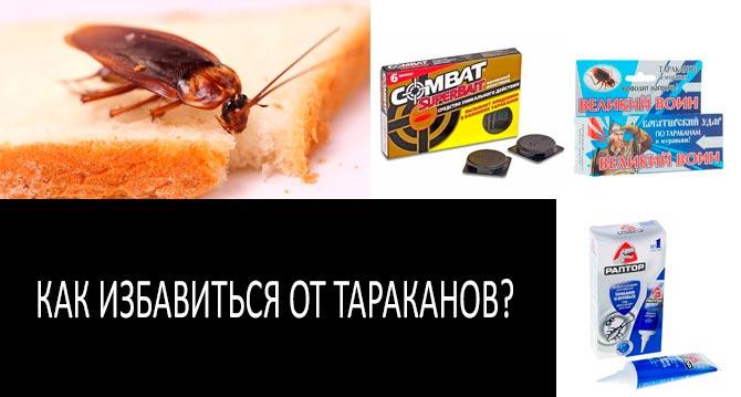 ловушки и ультразвуковые отпугиватели от тараканов