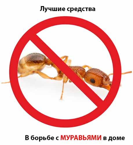 Как вывести муравьев из дома и квартиры