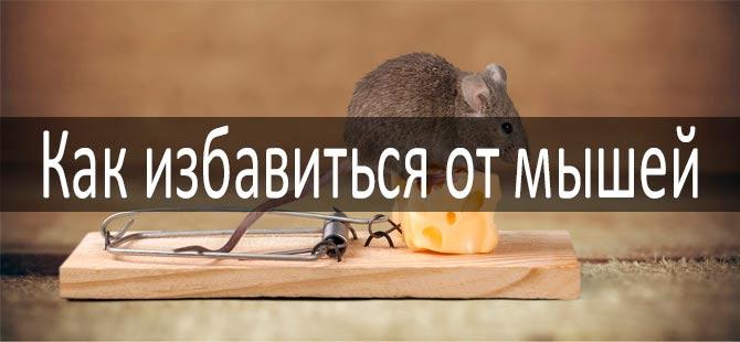 Как избавиться от мышей: фото
