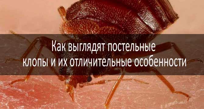 энтеросгель от паразитов
