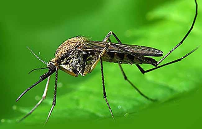 Как избавиться от комаров в квартире и на дачном участке: 7 лучших способов