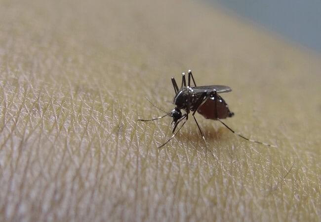 Обзор лучших ловушек для комаров: от самодельных до пропановых