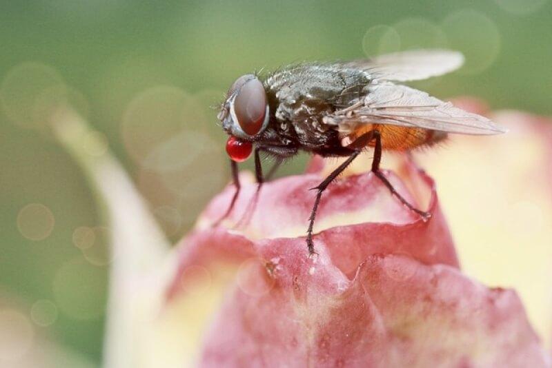 10 способов, как избавиться от комнатных мух: лучшие ловушки и репелленты