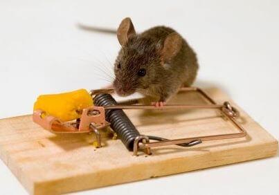 Одолели мыши что делать