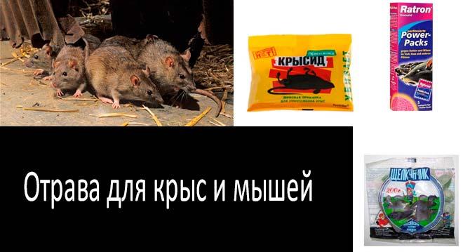 Отрава для крыс и мышей: какую выбрать?