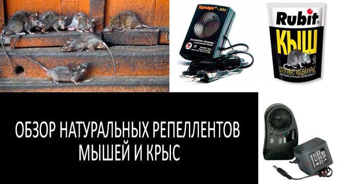натуральные репелленты мышей и крыс: фото