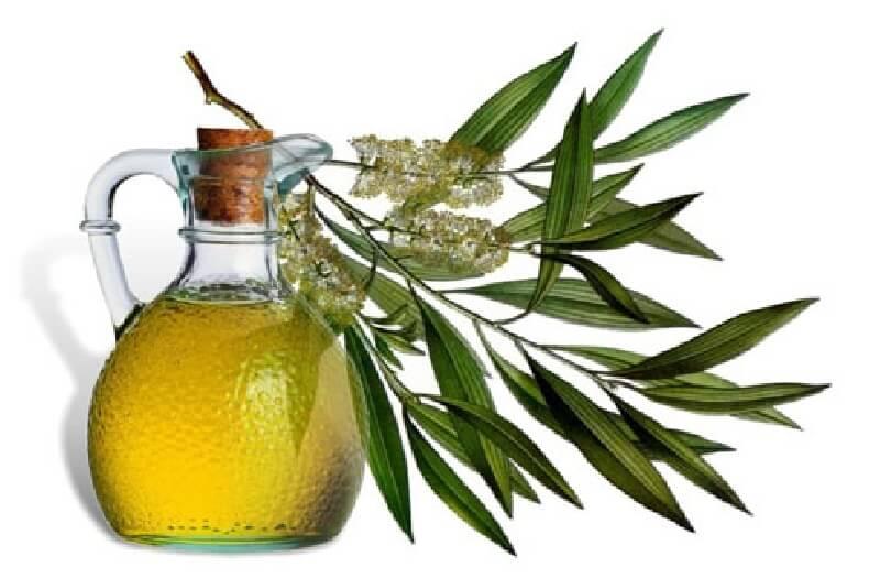 Убивает ли вшей масло чайного дерева? Мнения ученых