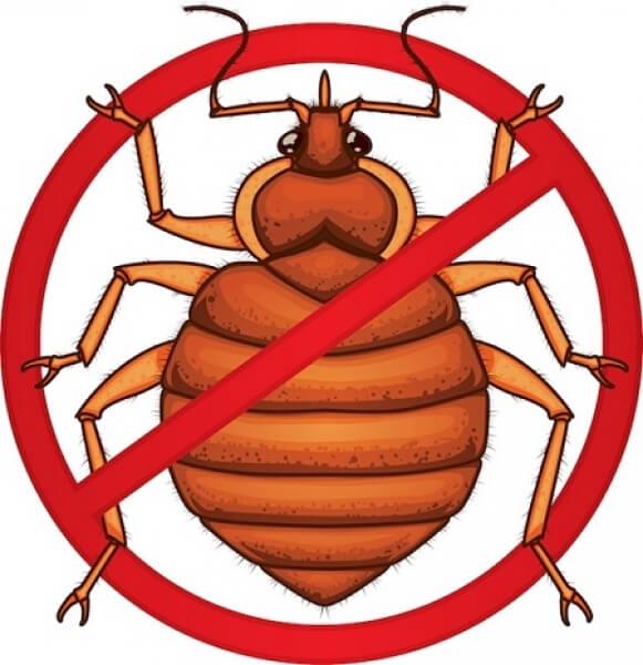Чем опасны тараканы и как избавиться от них без помощи специалиста?