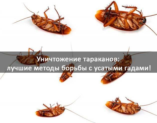 Уничтожение тараканов: фото