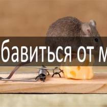 Средство от Муравьев сомбат